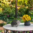 Kép 1/2 - Agyag teknős kerti dekoráció