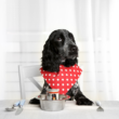 Kép 1/2 - Pet-Product senior vitamin 160 db tabletta kutya
