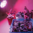 Kép 1/2 - Növénynevelő LED izzó E27 foglalattal, 2,5 W